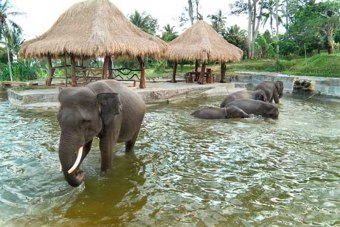 Balí_paseo en elefante_AustralasiaViajes_Just Married Market